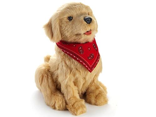 Golden Labrador Pup