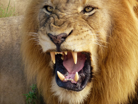 OLD PROVERB: March comes in like a Lion and goes out like a Lamb