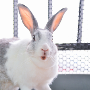 Rabbit owners in Northamptonshire need this life-saving dental advice