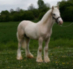 Aslan as a yearling