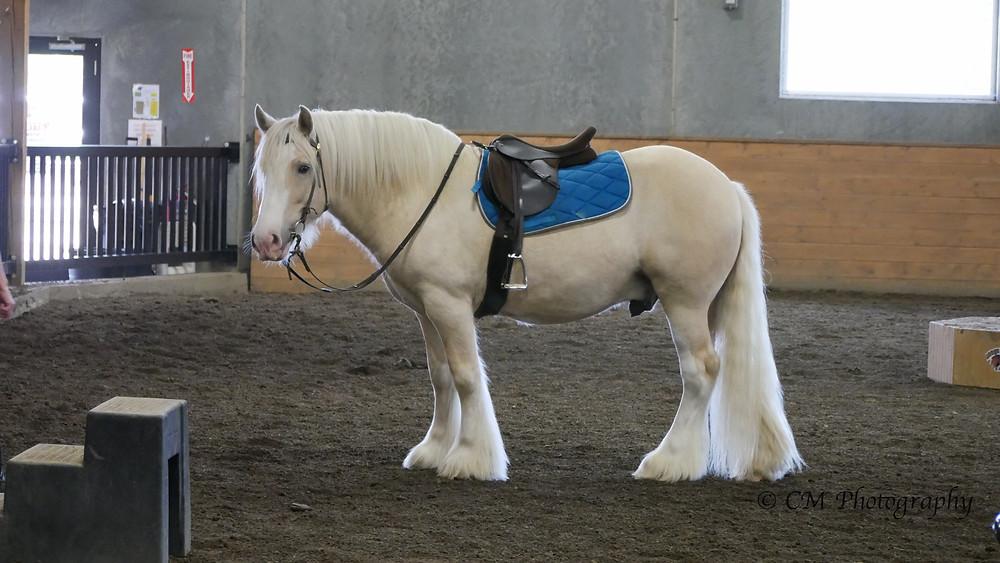 The new saddle