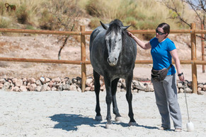 The Dominance Approach to Training Horses Part 3 of 4