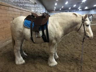 Yay a saddle!
