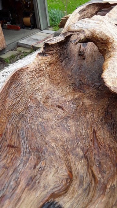 Cypress Knee Driftwood