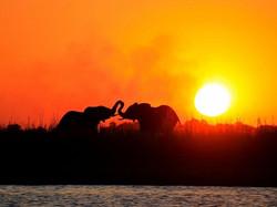 Botswana_Safari_Elephants_1100_730_84_s