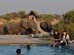 Elephant-Sands_botswana_