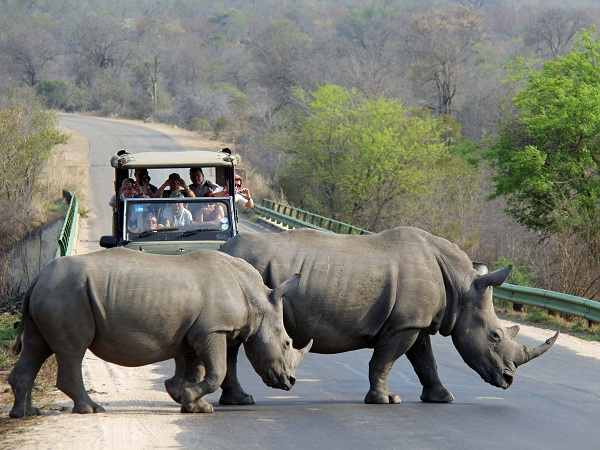 rhino-crossing-at-kruger-by-marla-sink-druzgal