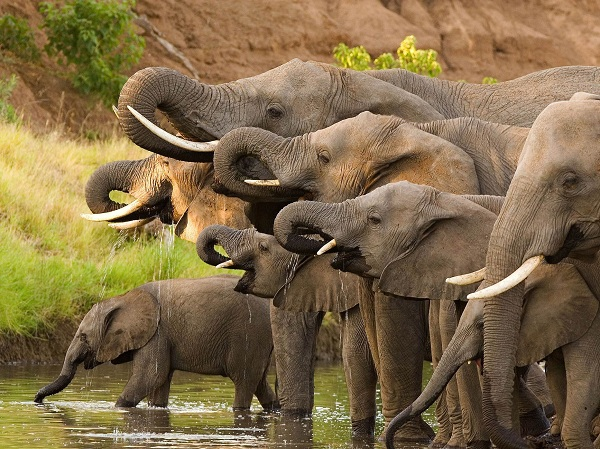Elephants-group