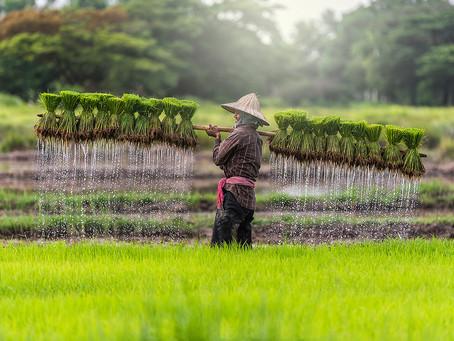 L'Asie du Sud-Est est une des régions du monde les moins touchées par cette pandémie