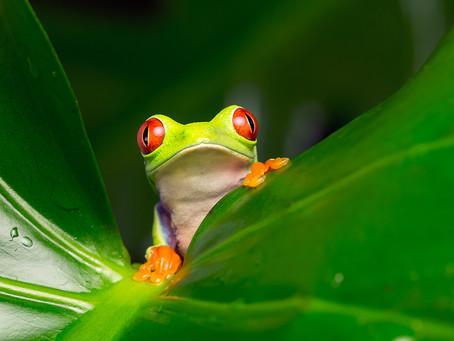 Le Costa Rica rouvre ses frontières aux touristes du monde entier