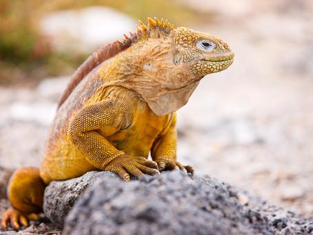 Les voyageurs vaccinés peuvent désormais se rendre en Équateur, y compris dans les îles Galápagos.