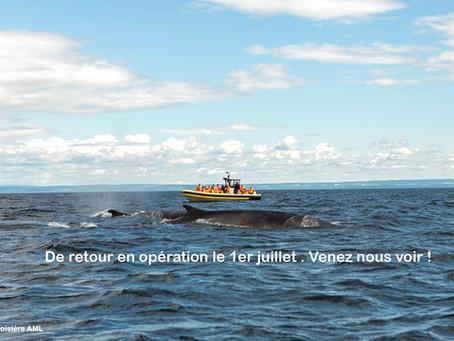 Canada: Croisière AML, c'est officiel, vous pouvez vous évader sur le fleuve cet été!