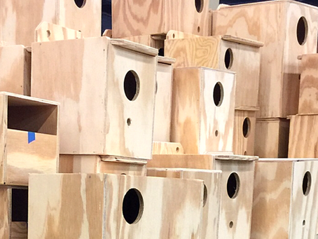Nest Boxes of All Sizes!  - and what you need to know BEFORE you decide to breed your birds.