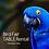 Thumbnail: Bird Fair Table Rental (CLUB MEMBERS)
