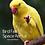 Thumbnail: Bird Fair Space Rental (NON-MEMBERS)