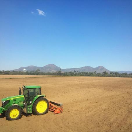 New Crop Planting