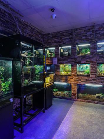 Mentone Aquarium 3