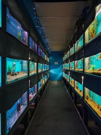 Mentone Aquarium 4
