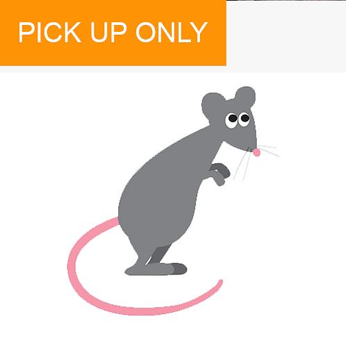 Frozen Medium Rats