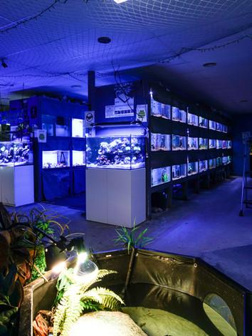 Mentone Aquarium 2