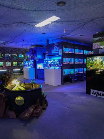 Mentone Aquarium 5