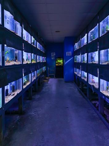 Mentone Aquarium 1