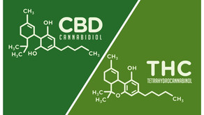 CBD vs. THC: What you need to know!