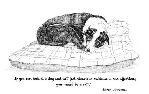 If you can look at a dog quote