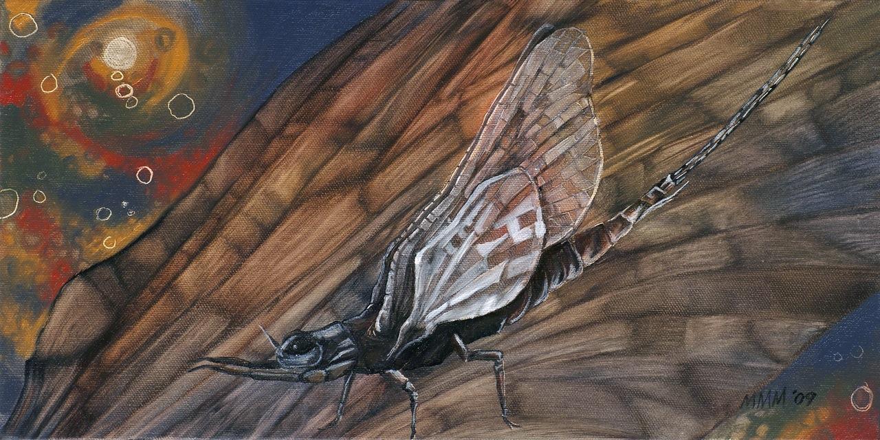 Mayfly #1