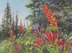 Mountaint Meadow