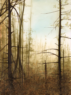 Beaver Lodge Forest