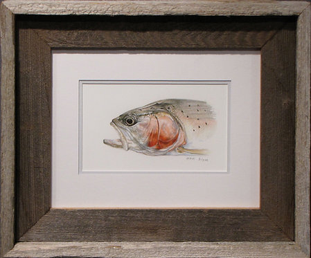 'Kestrel Rainbow' Small Framed Print