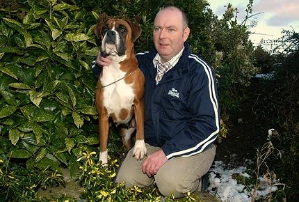 Bessbox Boxers Irelands Top Boxer Show Kennel and Breeders of Boxer Puppies