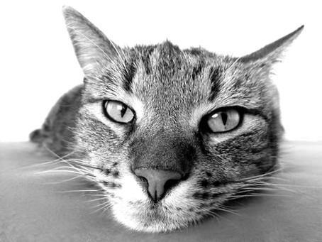 #MensajeBioAnimal -El Simbolismo de los Animales