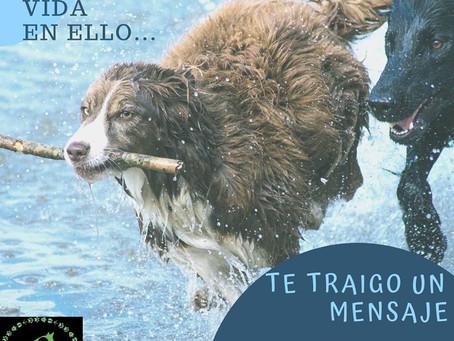 El #amor incondicional de tu #mascota te trae un mensaje.