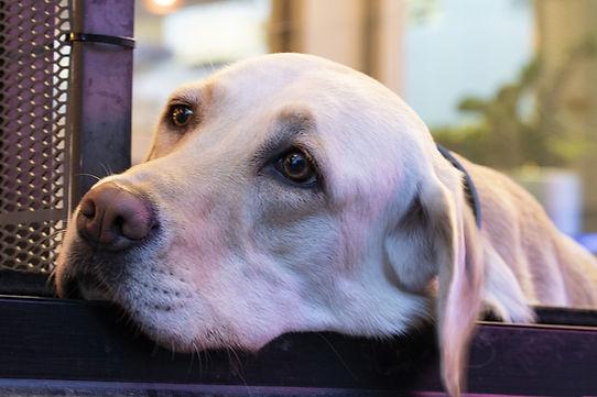 bioanimal perro.jpg