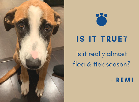 3 Simple Natural Tips for Flea and Tick Season