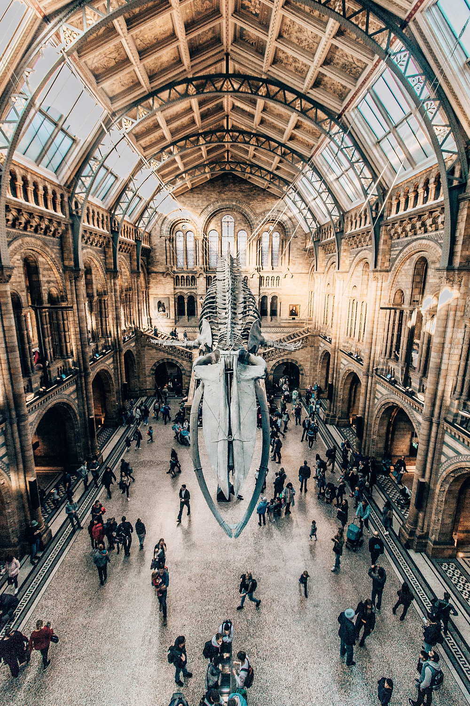 natural-history-museum-london-instagram-spot