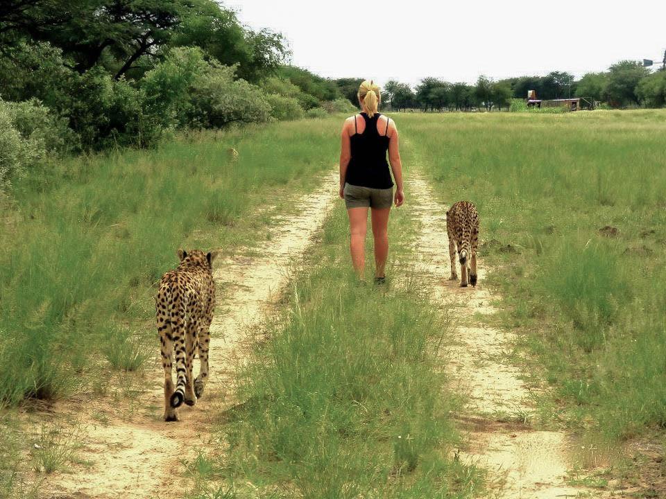 Namibia-harnas