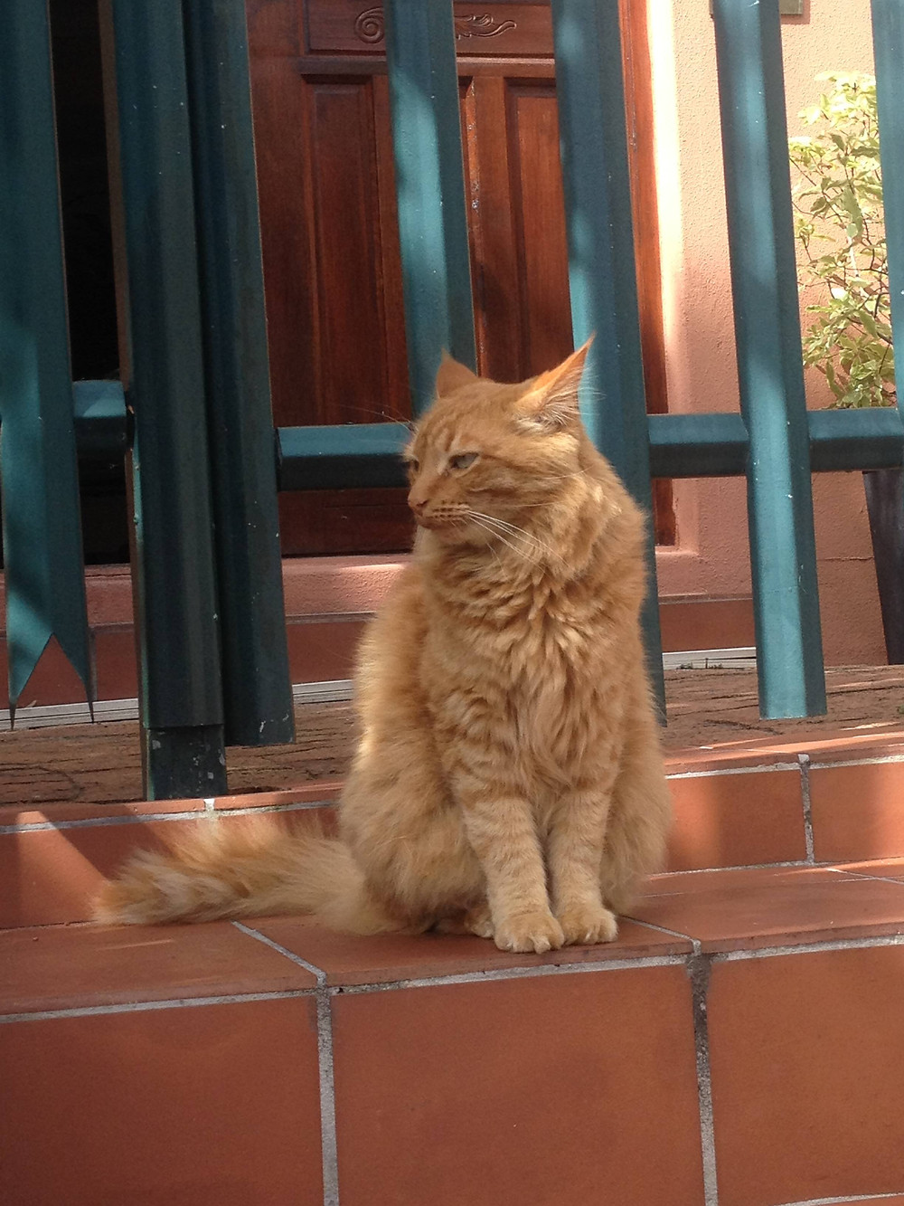 Mysterious Ginger Cat