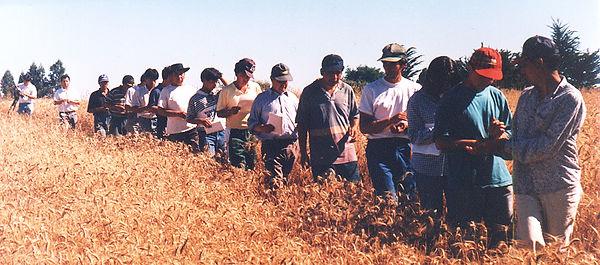 2. Fila Hombres Maquehua.jpg