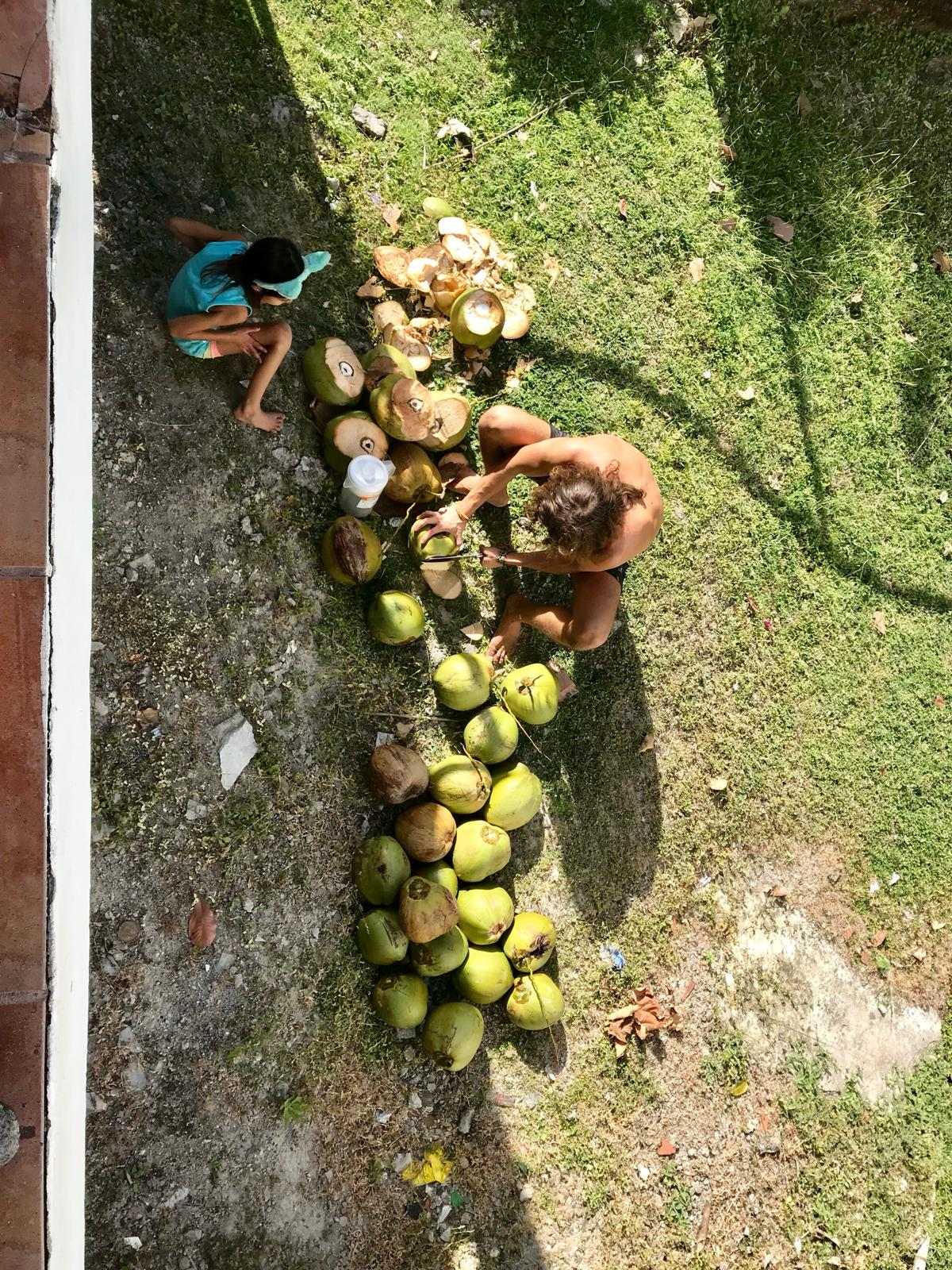 Wild Harvested Coconut Water
