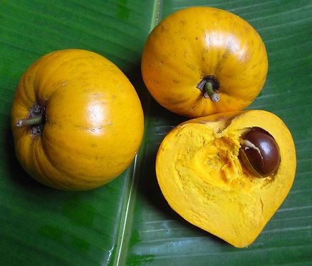 Egg Fruit Seeds