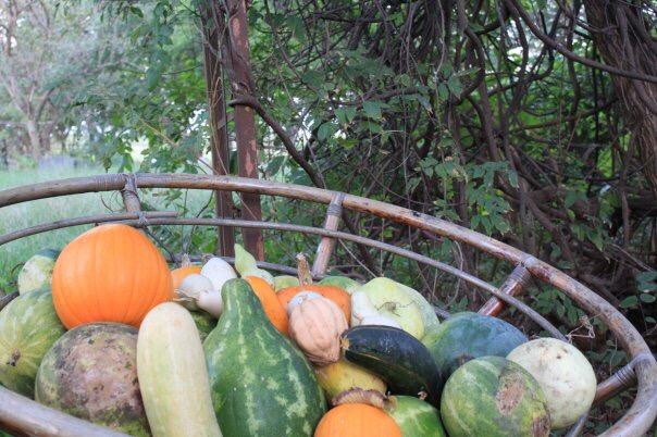 Homegrown Fall Harvest