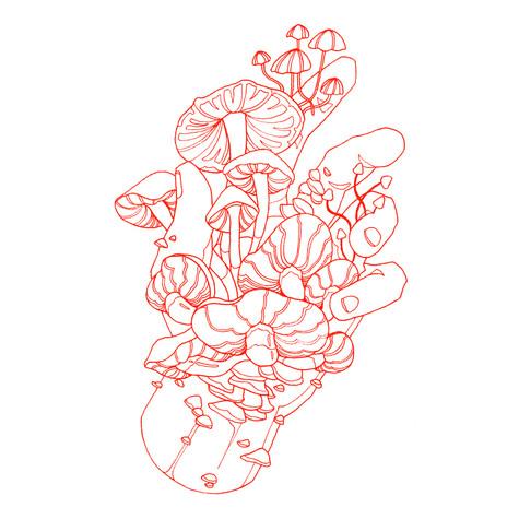 fungus2_b.jpg