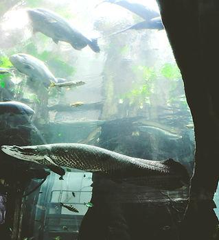 Aquarium at the California Academy of Sc