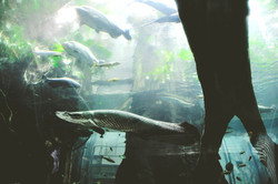 カリフォルニア科学アカデミーの水族館