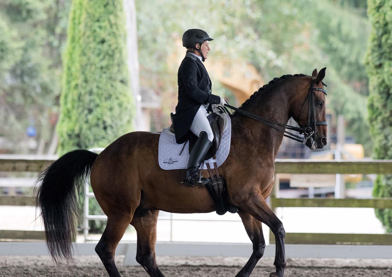 fancy Dressage Horse.jpeg
