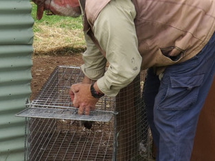 Hot trapping period begins 10th October, 2018