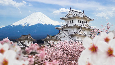 Himeji Castle and full cherry blossom, w